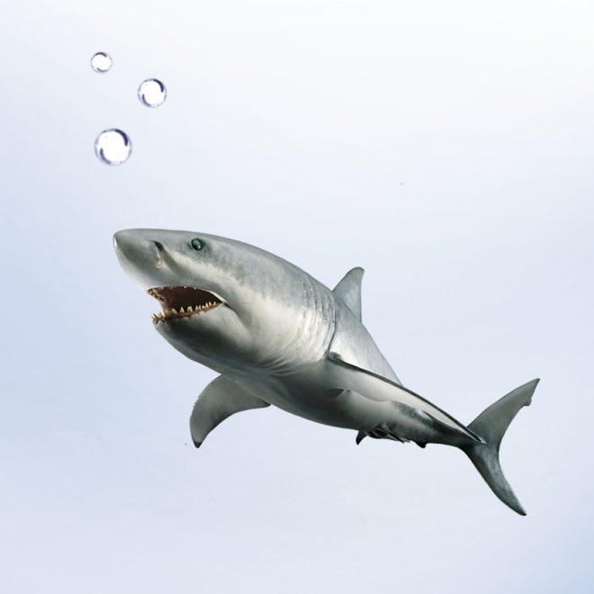 Shark-Bowl-1